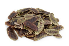 Kassiehülsen oder Kassie acutifolia Stockfoto