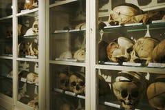 Kast met menselijke schedels Royalty-vrije Stock Afbeeldingen