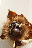 Autumn Leaf und Kastanie Lizenzfreie Stockfotos