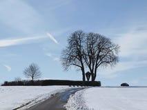 Kastanie im Winter (Aesculus hippocastanum) Lizenzfreie Stockfotos