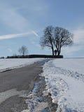 Kastaniebaum im Winter (Aesculus hippocastanum) Lizenzfreies Stockfoto