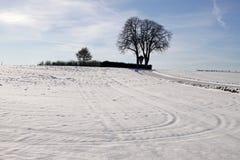 Kastaniebaum im Winter, Niedersachsen, Deutschland Stockfoto