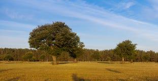 Kastaniebäume auf dem Gebiet in der goldenen Leuchte Lizenzfreies Stockbild