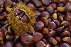 Kastanien auf natürlichem Hintergrund Stockfoto