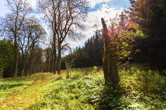 Kastanien-Gasse im Chateaupark Lizenzfreie Stockbilder