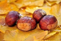 Kastanien und Herbstblätter Stockbild