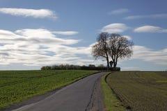 Kastanienbaum im Herbst, (Aesculus hippocastanum), Straße über den Feldern in schlechtem Iburg-Glane, Osnabruecker-Land, Niedersa Lizenzfreies Stockbild