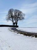 Kastanienbaum im Winter (Aesculus hippocastanum), Deutschland Stockfoto