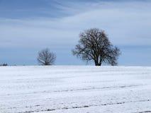 Kastanienbaum im Winter, Deutschland Stockbilder