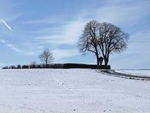 Kastanienbaum im Winter, Deutschland Lizenzfreie Stockfotografie