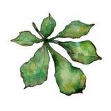 Kastanienblätter in einer Aquarellart lokalisiert Lizenzfreie Stockfotos