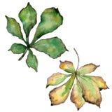 Kastanienblätter in einer Aquarellart lokalisiert Lizenzfreies Stockbild