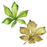 Kastanienblätter in einer Aquarellart lokalisiert Lizenzfreie Stockbilder