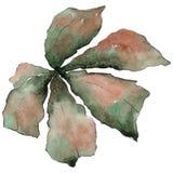 Kastanienblätter in einer Aquarellart lokalisiert Stockfotos
