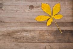 Kastanienblatt auf Holzoberfläche mit freiem Raum stockfoto