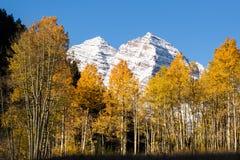 Kastanienbraune Bell über Aspen-Bäumen im Fall Lizenzfreies Stockfoto