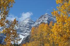 Kastanienbraune Bell und goldene Espen stockfotos
