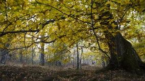 Kastaniendetail im Wald im Herbst Lizenzfreie Stockbilder