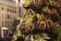Kastanienfrucht auf Niederlassung auf Baum Stockbild