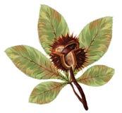 Kastanj med sidor och gula toner av hösten stock illustrationer