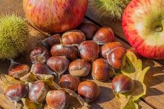 Kastanj-, skal-, äpple- och eksidor på en trätabell arkivfoto