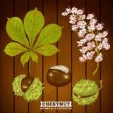 Kastanje Autumn Botanical Vector Illustration Stock Afbeelding
