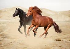 Kastanje en zwarte paarden in woestijn stock foto