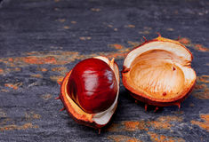Kastanje in shell op lei Stock Afbeeldingen
