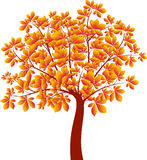 Kastanjeboom, Autumn Tree Vector Stock Afbeelding