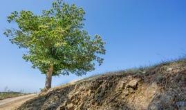 Kastanjeboom en spoor Stock Afbeeldingen