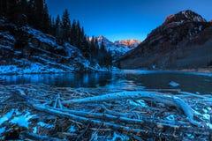 Kastanjebruine Klokken in Wit Rivier Nationaal Bos, Colorado royalty-vrije stock fotografie
