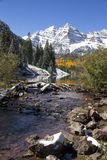 Kastanjebruine Schoonheden Colorado Royalty-vrije Stock Foto