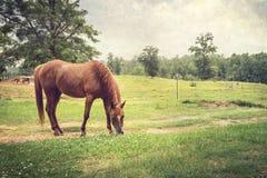 Kastanjebrun häst i lantlig inställning Arkivfoto