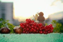 Kastanjebrun söt kastanj, rönn _ gjorde begreppsmässig hjärta för Cherryet fototomater fotografering för bildbyråer