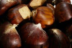 kastanjebrun sötsak Fotografering för Bildbyråer