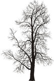 kastanjebrun tree Fotografering för Bildbyråer