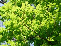 Trees fjädrar in tid Arkivbilder