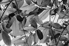 Kastanjebruna höstsidor i skuggor av grå färger mönstrar bakgrund Arkivfoto