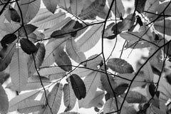Kastanjebruna höstsidor i skuggor av grå färger mönstrar bakgrund Arkivfoton