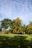 Kastanjebruna träd i höst Royaltyfria Foton