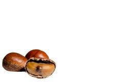 Kastanjebrunt frö Arkivfoton