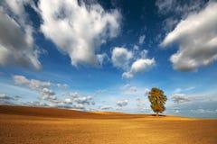 Kastanjebrunt träd för höst i ett plogat fält Fotografering för Bildbyråer