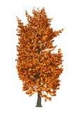 kastanjebrunt träd för illustration 3D på vit Royaltyfria Foton