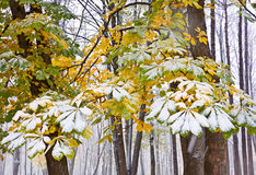 Kastanjebrunt träd under snö Arkivfoton