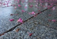 Kastanjen blommar på granit Royaltyfria Bilder