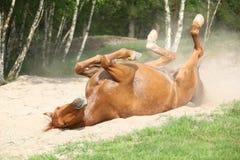 Kastanjepaard die in het zand in de hete zomer rollen Royalty-vrije Stock Fotografie