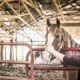 Kastanjepaard met Blaze Looking Over een Omheining Royalty-vrije Stock Foto