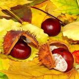 Kastanjer på leaves arkivfoto