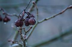 Kastanjer på våren fotografering för bildbyråer