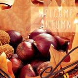 Kastanjes, droge bladeren en de tekst welkome herfst Stock Fotografie